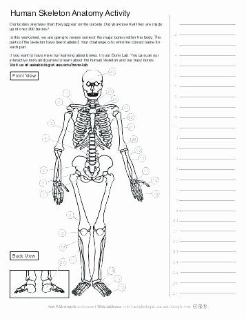 Free Printable Human Anatomy Worksheets Anatomy Worksheets Printable College Unlabeled Brain