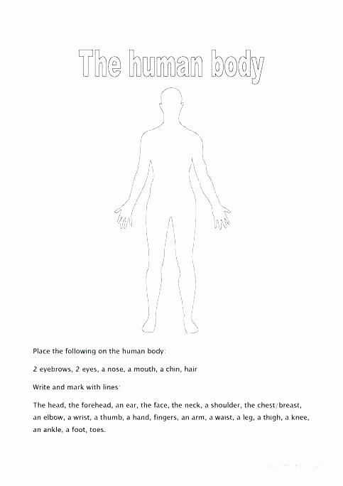 Free Printable Human Anatomy Worksheets Body Worksheets – Primalvape