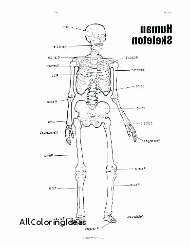 Free Printable Human Anatomy Worksheets Free Anatomy Worksheets for College