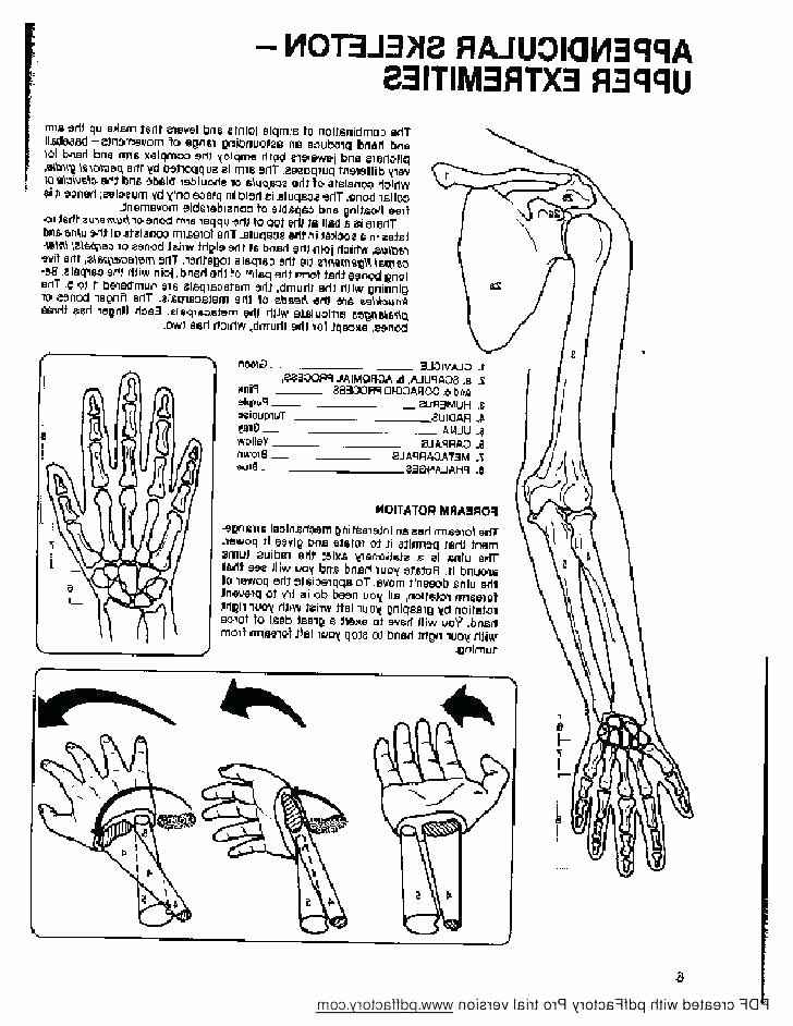 Free Printable Human Anatomy Worksheets Free Printable Human Anatomy Coloring Pages – Sidyak