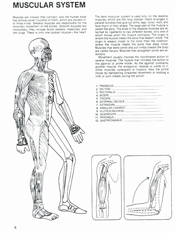 Free Printable Human Anatomy Worksheets Human Anatomy Worksheets Labeling Respiratory Health Label