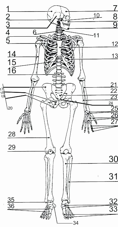 Free Printable Human Anatomy Worksheets Human Body Coloring Pages Printable – Carriembecker
