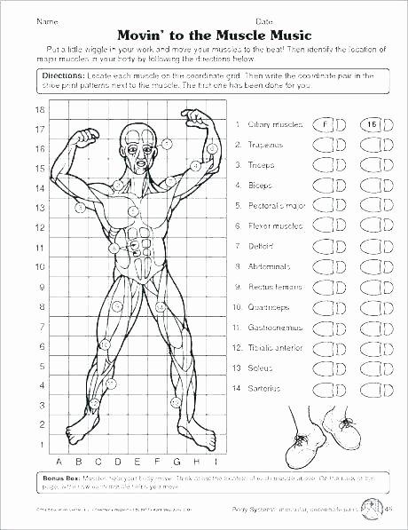 Free Printable Human Anatomy Worksheets Human Body Systems for Kids Worksheets Free Human Body