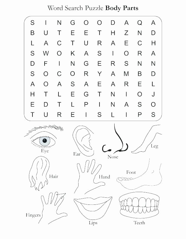 Free Printable Human Anatomy Worksheets Kindergarten Body Worksheets Free Human for Matching Parts