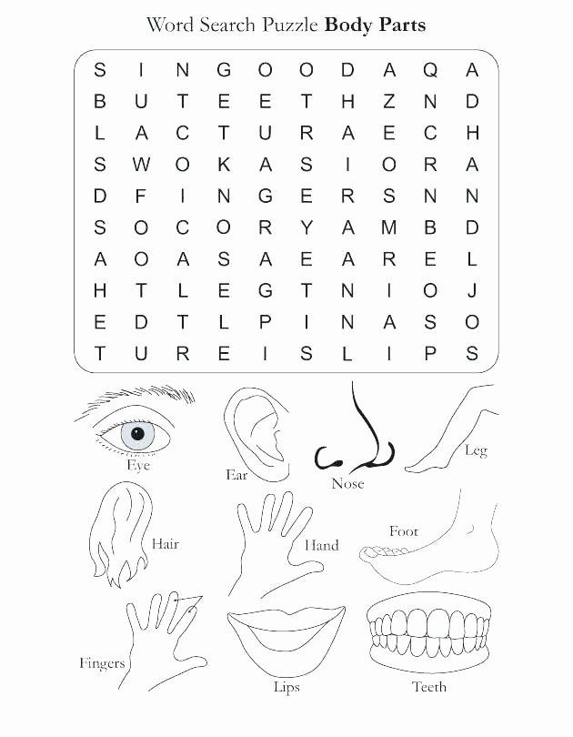 Free Printable Human Anatomy Worksheets Kindergarten Body Worksheets Free Human for Matching Parts