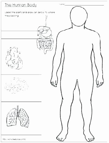 Free Printable Human Anatomy Worksheets Science Fill In the Blank Worksheets