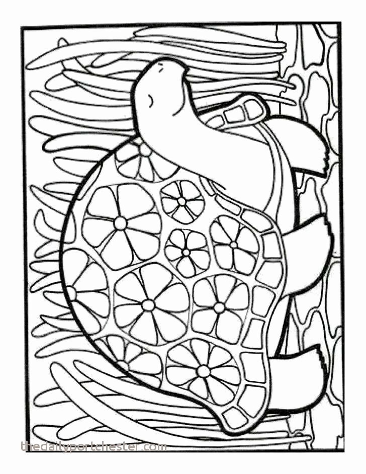 Fruit Colouring Pages 10 Lovely Free Advanced Coloring Pages