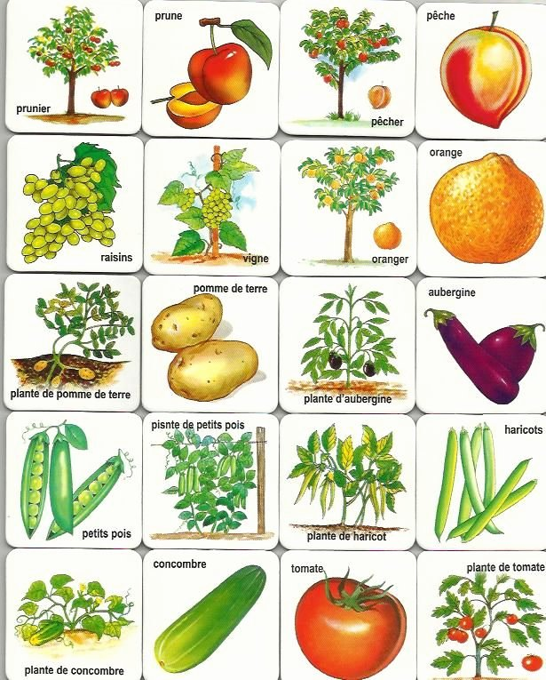 Fruits and Vegetables Worksheets Pdf Free Printable Fruits and Ve Ables Cards