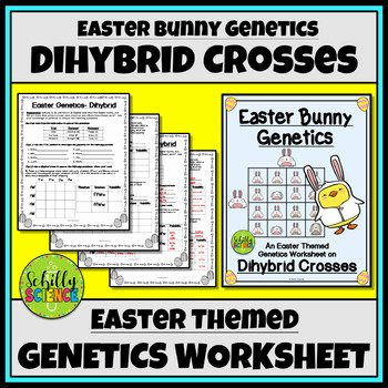 Genetics and Heredity Worksheet Luxury Genetics Punnett Square Heredity Worksheets & Teaching