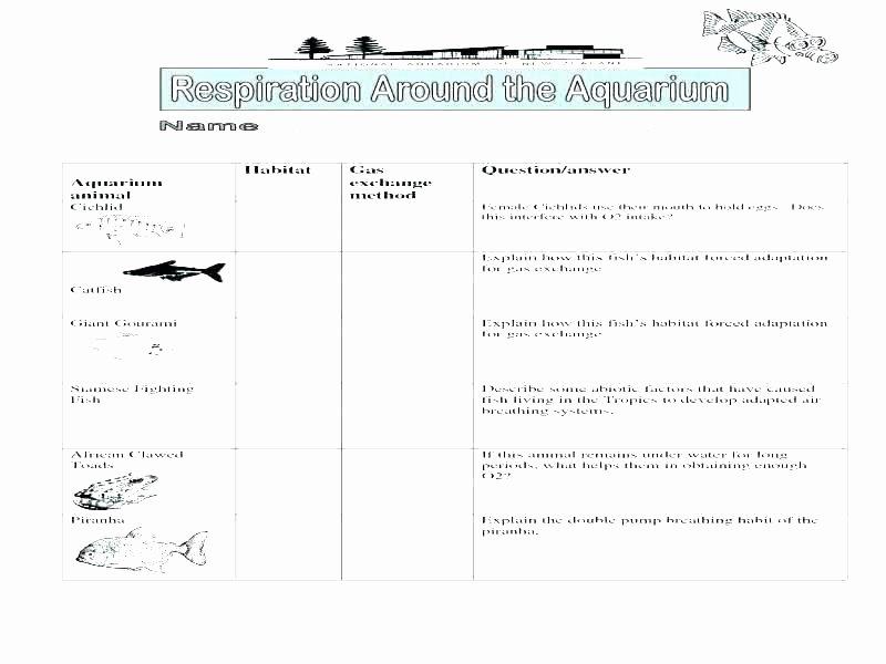 Grammar Worksheets for 2nd Grade Second Grade Grammar Worksheets