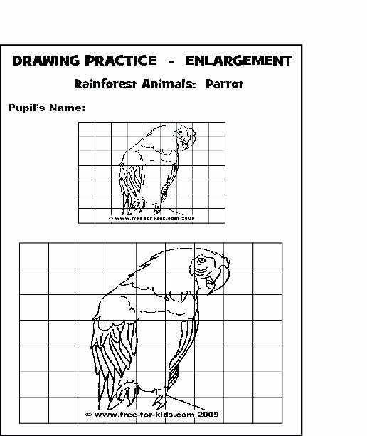 grid drawing worksheets high school middle info