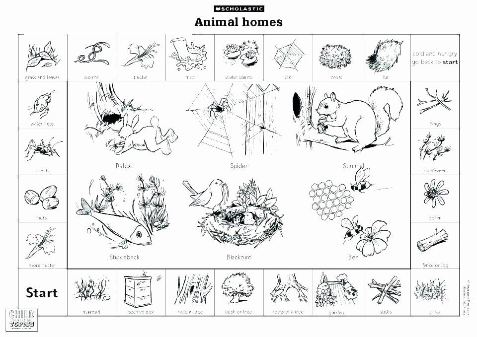 Habitat Worksheets for 1st Grade Animal Habitat Matching Printable Worksheets Free for First