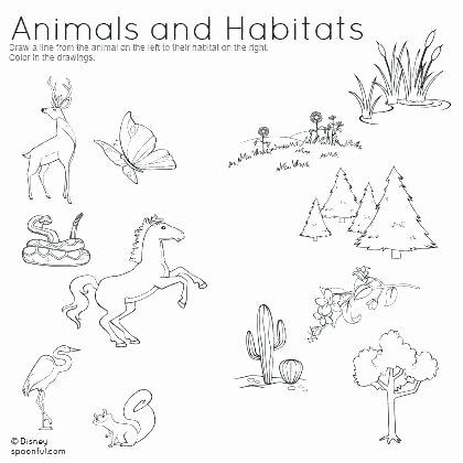 Habitat Worksheets for 1st Grade Problem solving In Science Activities Worksheet for Kids
