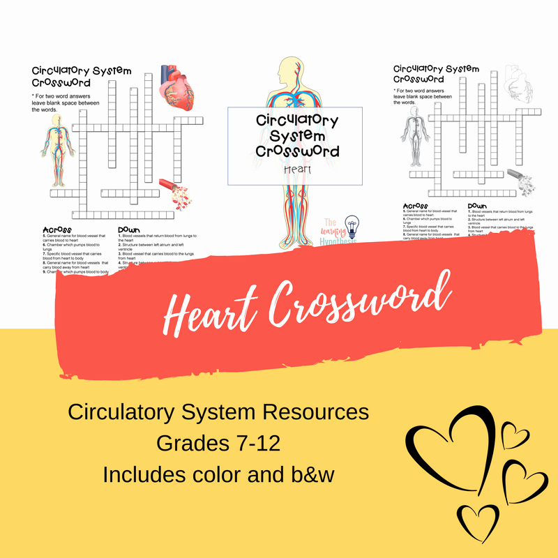 Heart Diagram Worksheet Blank Blank Heart Diagram Inspirational Heart Diagram Unlabeled