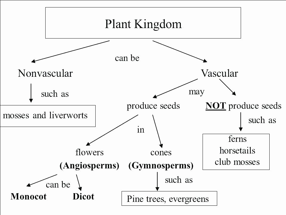 flower diagram without labels seedless vascular plants flower diagram blank printable of respiratory system angiosperm flower diagram flower diagram labeled and functions