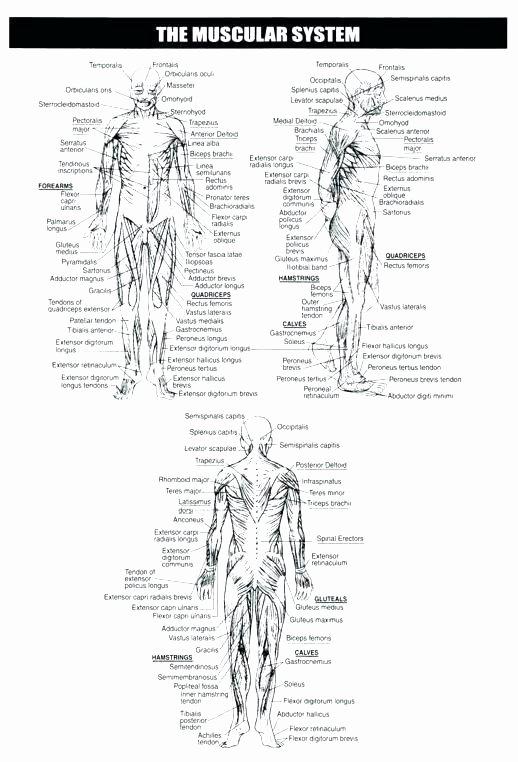Heart Diagram Worksheet Blank Muscle Fill In the Blank Worksheets