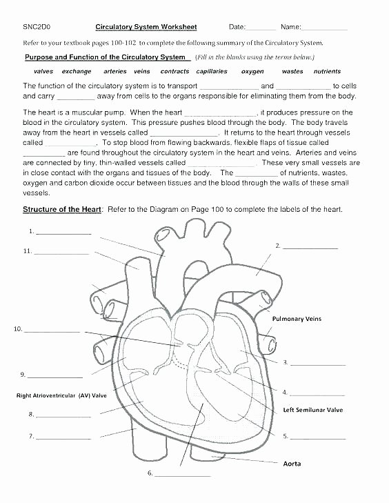 Heart Diagram Worksheet Blank Skeletal Diagram Label Wiring Diagrams List