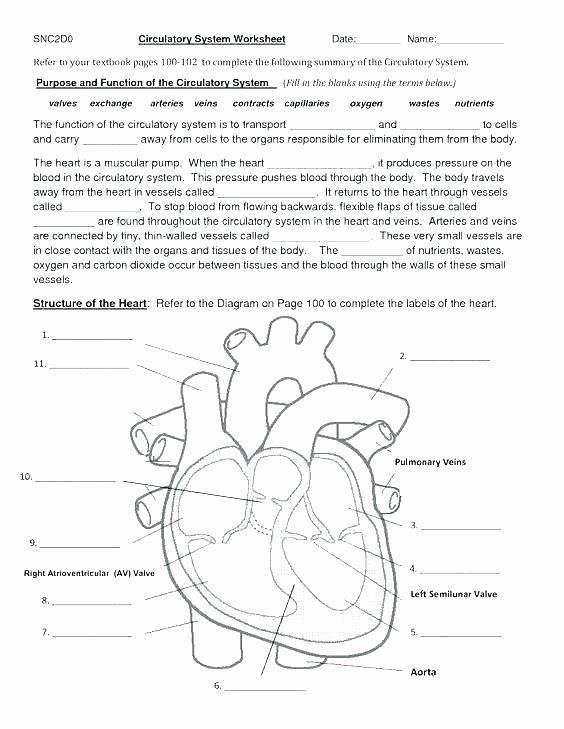 Heart Diagram Worksheet Blank Skeletal Diagram Label Wiring Diagrams List
