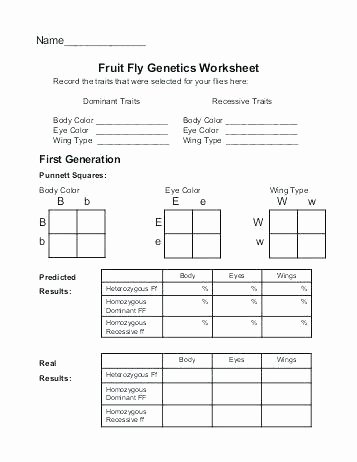 Heredity Traits Worksheets Awesome Heredity Punnett Squares Worksheets