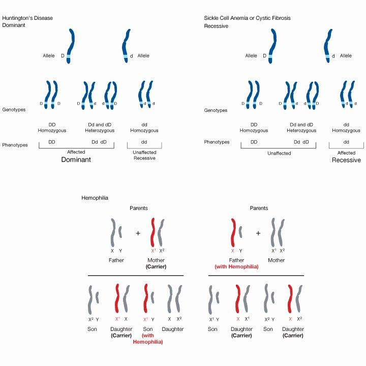 Heredity Traits Worksheets Best Of Inherited Traits Worksheet Inspirational 5th Grade Heredity