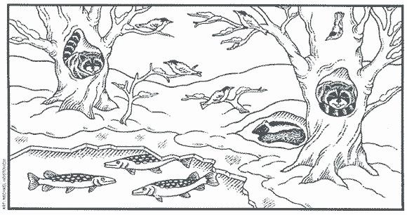 Hibernation Coloring Page Animals that Hibernate for Kids Worksheet Cloud Reviews