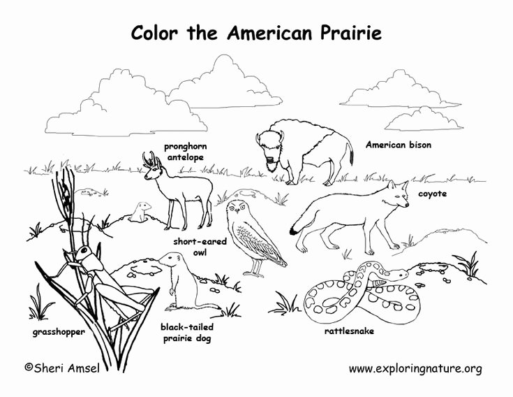 Hibernation Coloring Page Curriculum In Nature