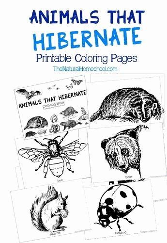Hibernation Coloring Page Hibernation Activity