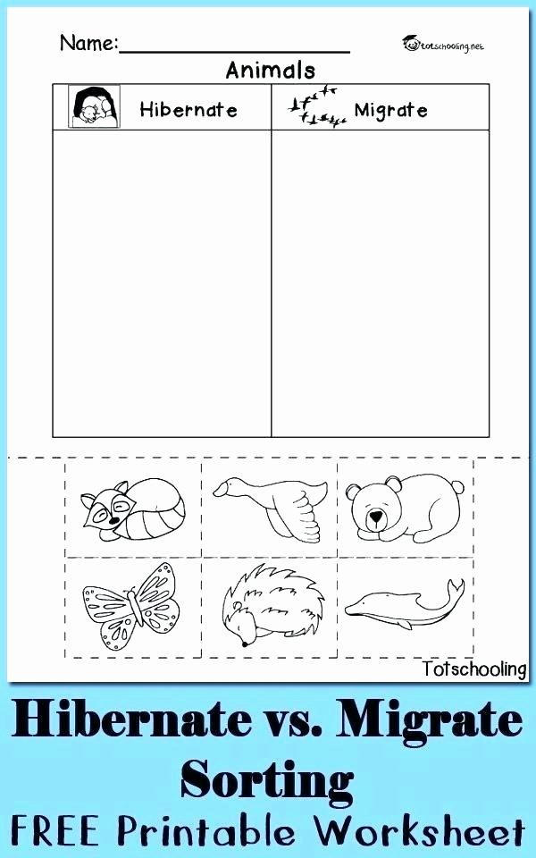 Hibernation Worksheet for Preschool Free Teacher Worksheets for Preschool