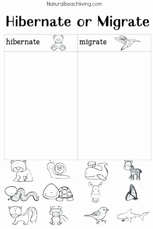 Hibernation Worksheet for Preschool Hibernation Worksheets for First Grade – Spieleaffefo
