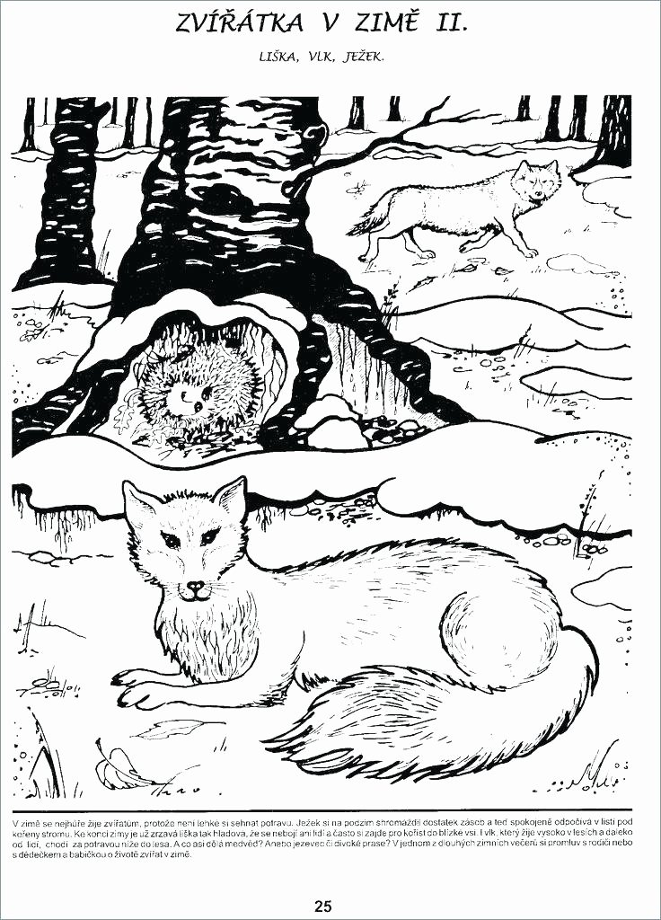 Hibernation Worksheets for Kindergarten Hibernation Landscape Poster Activity Sheet Great Animals