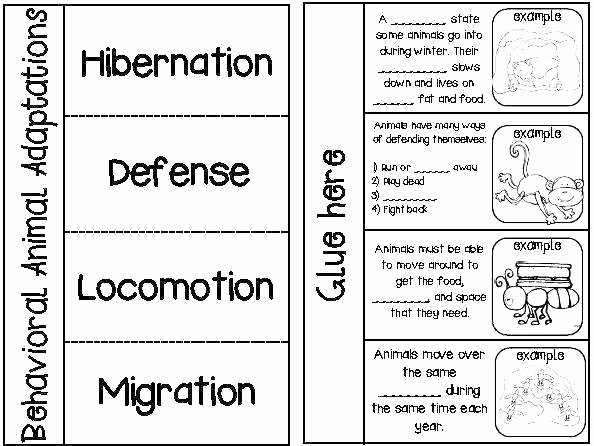 Hibernation Worksheets for Kindergarten Hibernation Worksheets