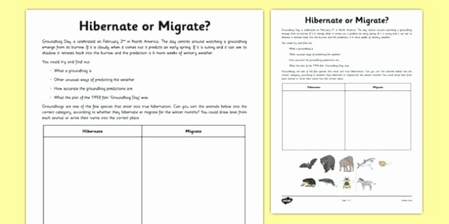 Hibernation Worksheets for Preschool Animal Hibernation sorting Worksheet Activity Sheet