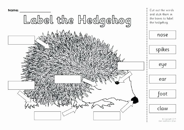 Hibernation Worksheets for Preschool Hibernation Activity Kindergarten Worksheet Migration