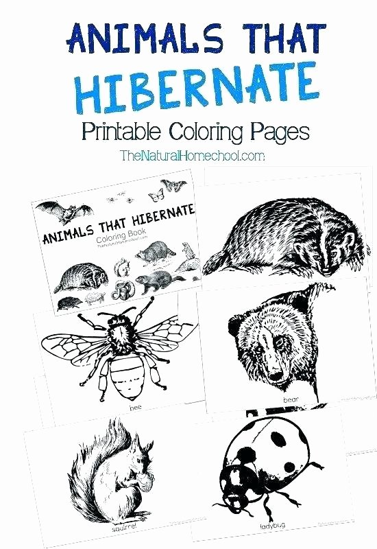 Hibernation Worksheets for Preschool Hibernation Worksheets for First Grade Hibernating Animal