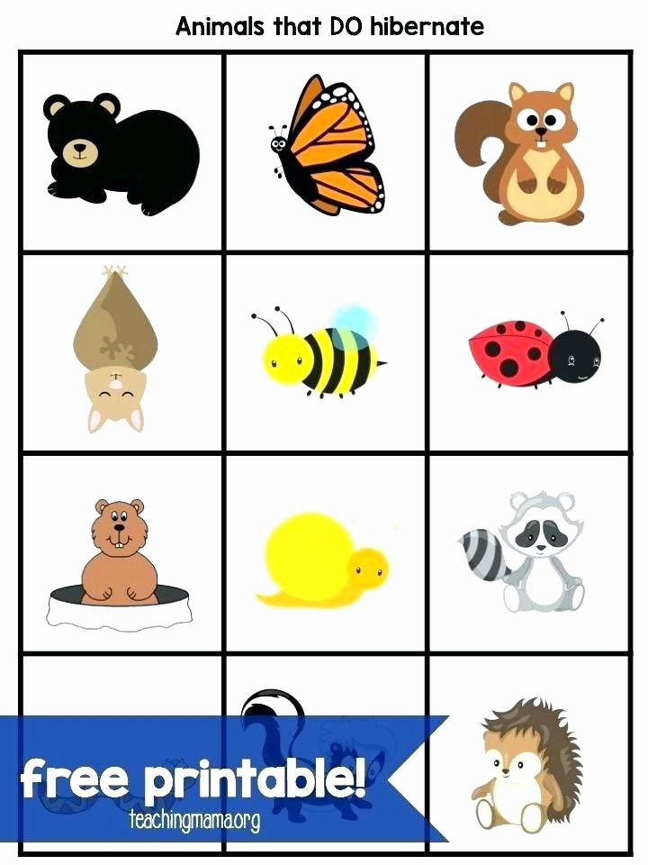 Hibernation Worksheets for Preschool Hibernation Worksheets for Preschoolers