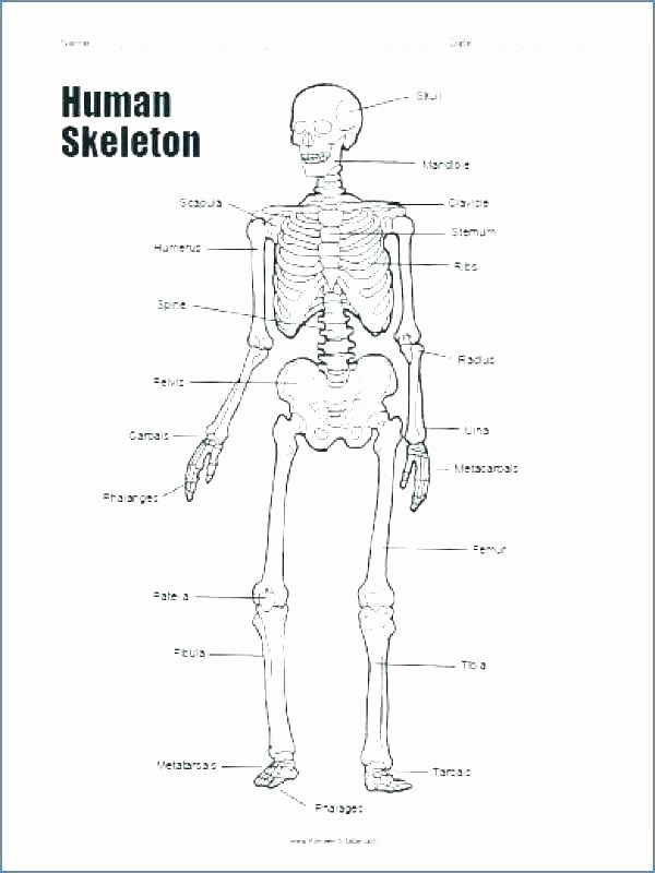 Human Anatomy Worksheets for College Anatomy Worksheets Printable Anatomy Worksheets Pretty