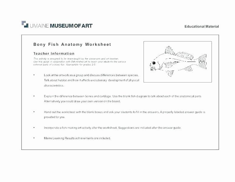 Human Anatomy Worksheets for College Fish Worksheets for High School