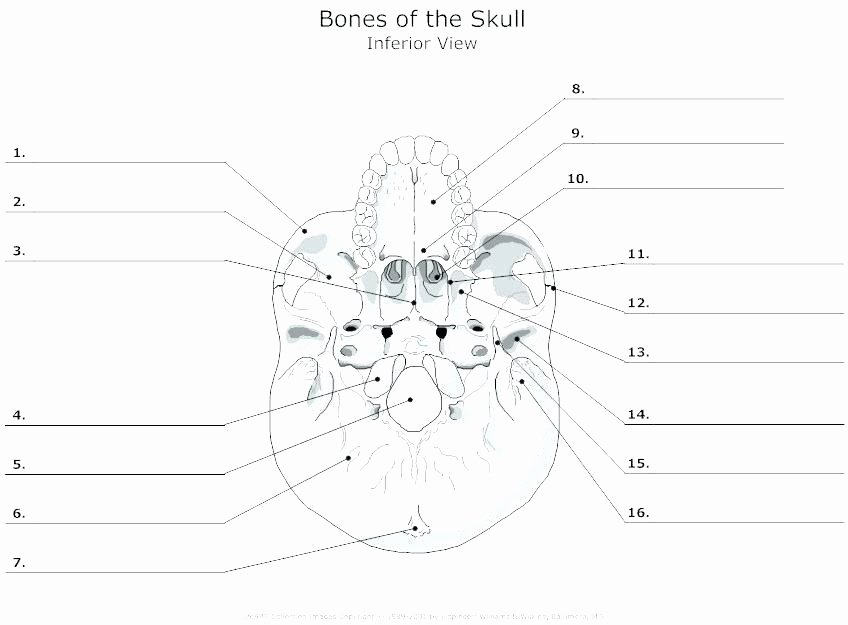 Human Anatomy Worksheets for College Free Anatomy Worksheets for College Printable Anatomy
