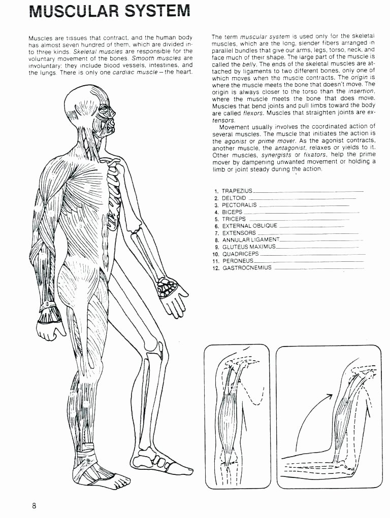 grade human body worksheets summary of the muscular system brilliant ideas for middle school anatomy grade human body worksheets human body worksheets free human body worksheets for 2nd grade