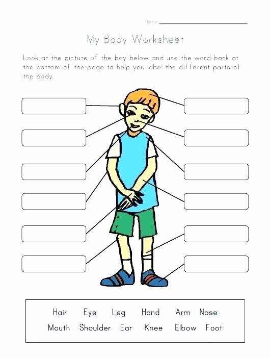 Human Anatomy Worksheets for College Printable Anatomy Labeling Worksheets