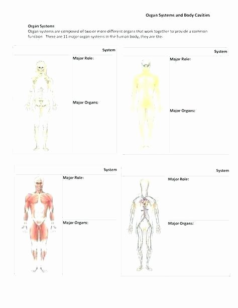 Human Body for Kids Worksheets Body Systems and Functions Worksheets