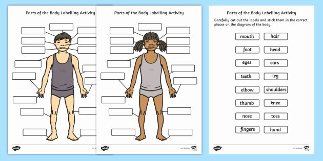 Human Body for Kids Worksheets Human Body Parts Labelling Activity