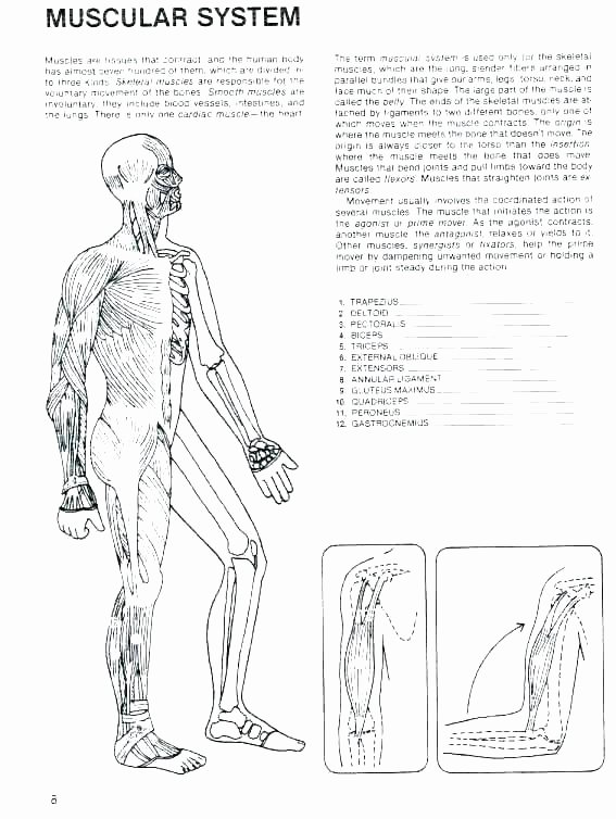 Human Body for Kids Worksheets Human Body Printable Worksheets