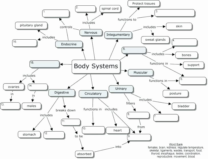 Human Body for Kids Worksheets Printable Human Body Systems Worksheets Medium Size