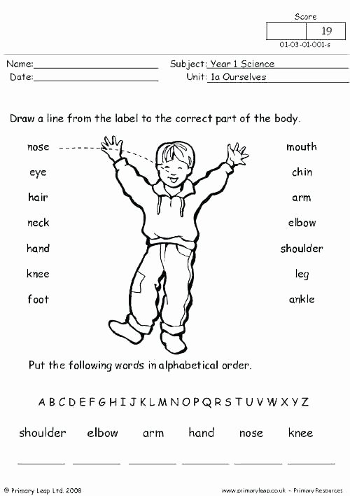 Human Body Labeling Worksheets Body Image Worksheets