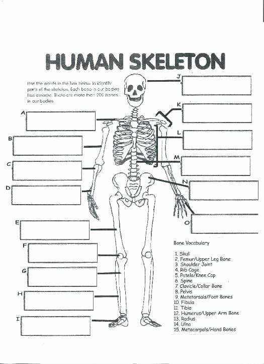 Human Body Labeling Worksheets Free Printable Human Anatomy Worksheets