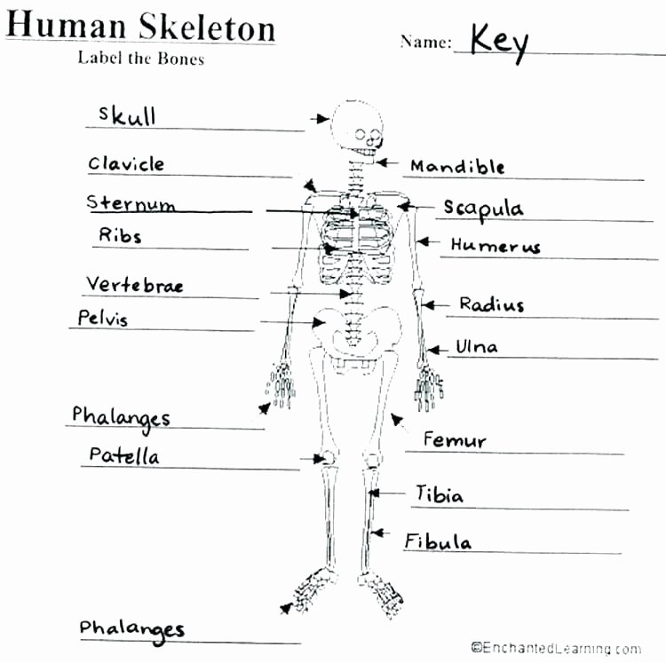 Human Body Labeling Worksheets Grade 5 Science Worksheets Human Body – Onlineoutlet
