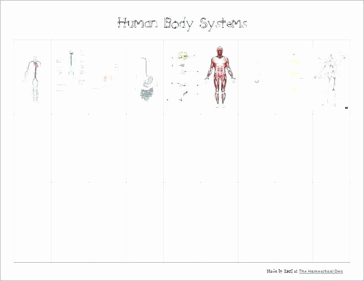 Human Body Systems Matching Worksheet 3rd Grade Human Body Worksheets