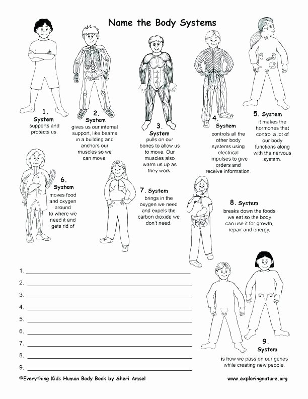 Human Body Systems Matching Worksheet Body Systems Worksheets Answers