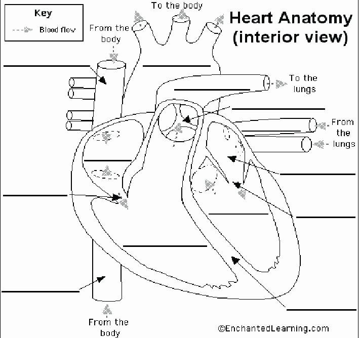 circulatory system printables grade digestive system worksheets beautiful circulatory lesson plan 5 worksheet human circulatory system worksheet human circulatory system worksheet pdf
